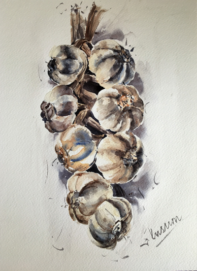 Garlic Bunch Painting by Berkshire Watercolour Artist Kusum Shabong