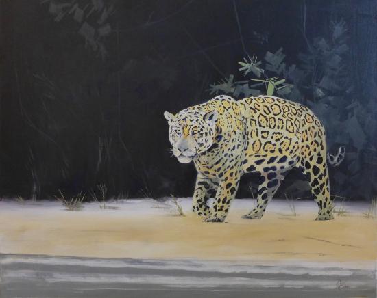 Hunting Jaguar - Art Studio - Spencers Wood, Berkshire by arrangement - David Cotton