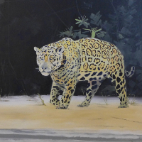 Hunting Jaguar Animal Portrait – Art Studio – Spencers Wood, Berkshire by arrangement – David Cotton