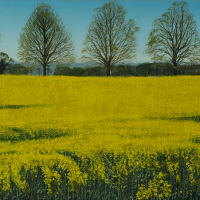 Spring – The Road to Ashampstead near Goring – Caversham Artist Michael Norcross
