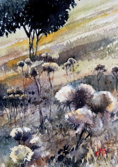 Thistles Evening Sunlight - Watercolour Painting by Reading Guild of Artists member Richard Cave