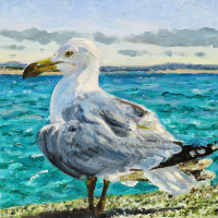 Seagull Oil Painting by Animal Artist Karen Davies