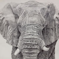 Elephant Painting - Hampshire Artists Art Gallery