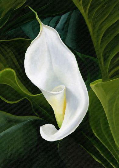 Arum Lily Unfurling - Botanical Art - Acrylic Painting by Berkshire Artist Kerry Webb