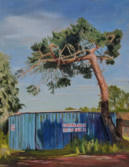 Lonesome Pine LAOTY Submission Oil Painting by Berkshire Artist Shelagh Casebourne